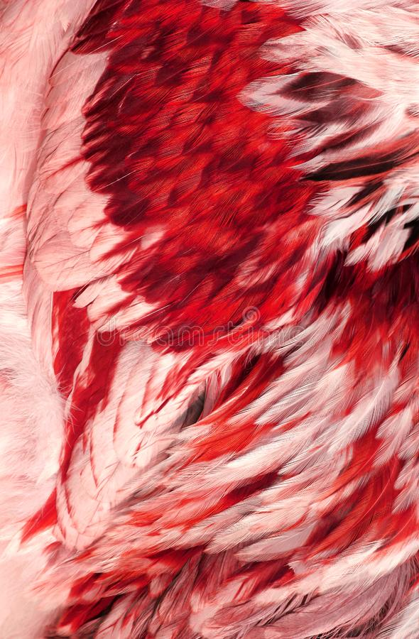 Abstract Red Feathers stock images