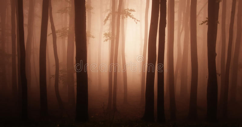 Abstract red forest. Abstract photo of a red forest with fog stock images