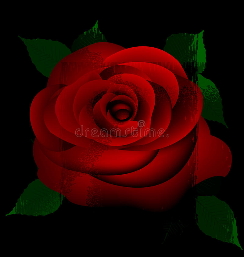 Abstract red rose vector illustration