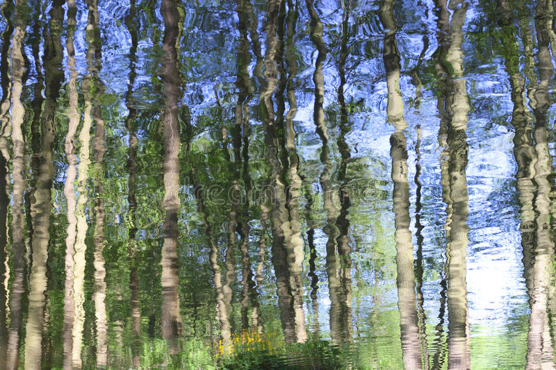 Abstract reflection of forest trees in water. Abstract reflection of forest trees on a river surface royalty free stock photo