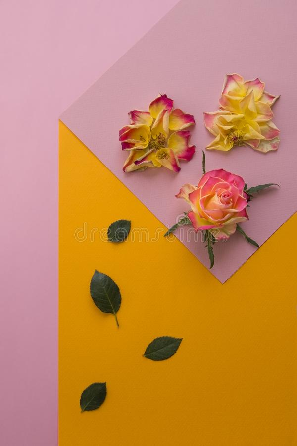 Abstract representation with roses on colorful background stock photos