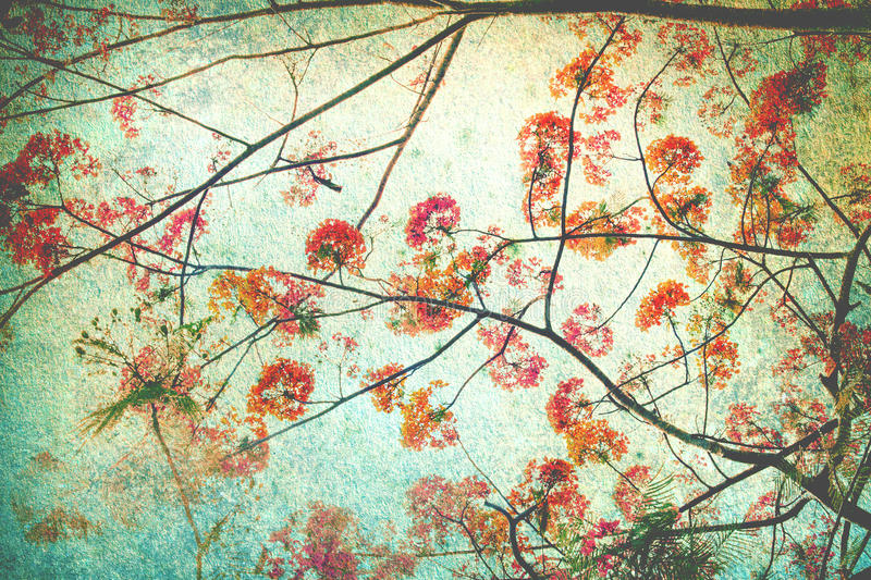 Abstract retro background from Flam-boyant or peacock flowers filtered by grunge texture , Chinese style stock photo