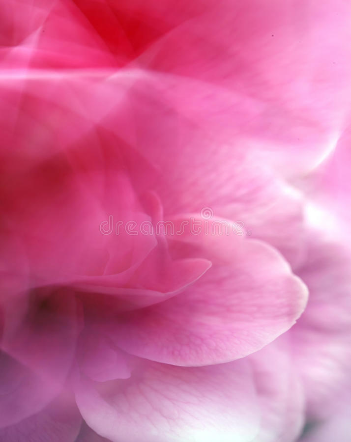 Download Abstract rose stock image. Image of rose, design, pink - 32489683