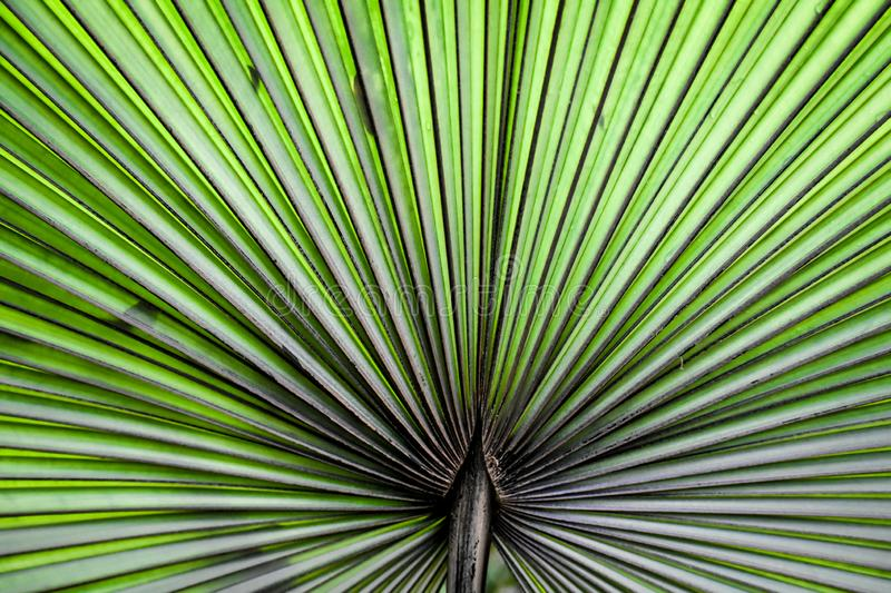 Abstract Ruffled Fan Palm Plant Background royalty free stock images