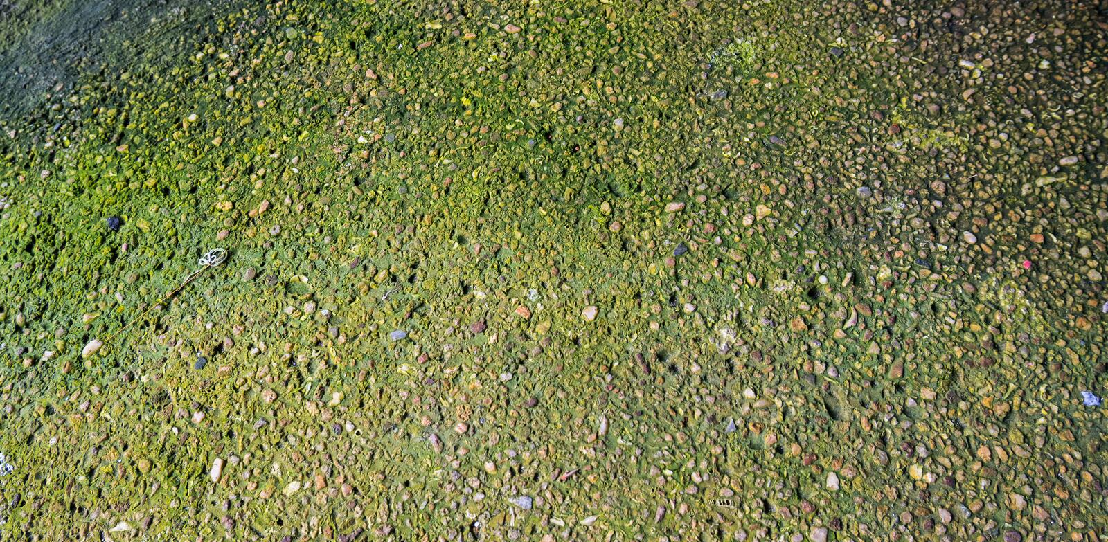 Abstract of sand wash with green moss texture. Abstract of sand wash with green moss texture royalty free stock image