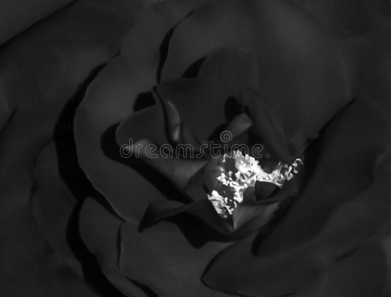 Abstract satin textured black flower with a white center background stock images
