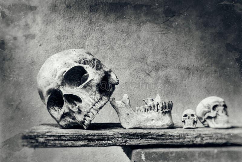 Abstract schedelstilleven met krasvoorgrond in zwarte en w stock fotografie