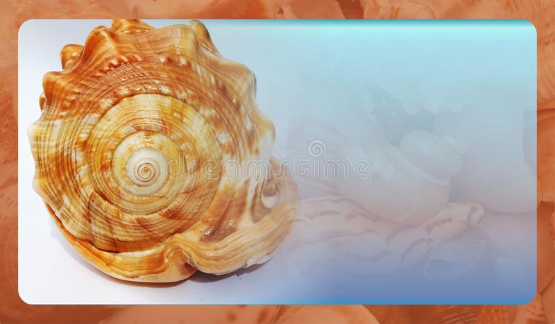 Abstract sea shell background template for website, abstract info graphics template design. Banner, business card, invitation.Abstract info graphics template stock images