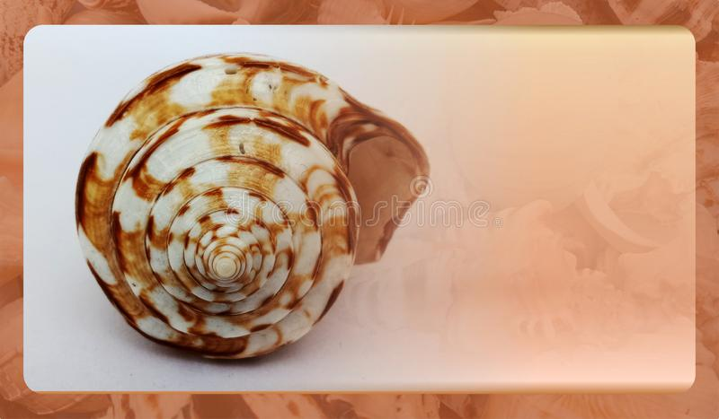 Abstract sea shell background template for website, abstract info graphics template design. Banner, business card, invitation.Abstract info graphics template royalty free stock photo