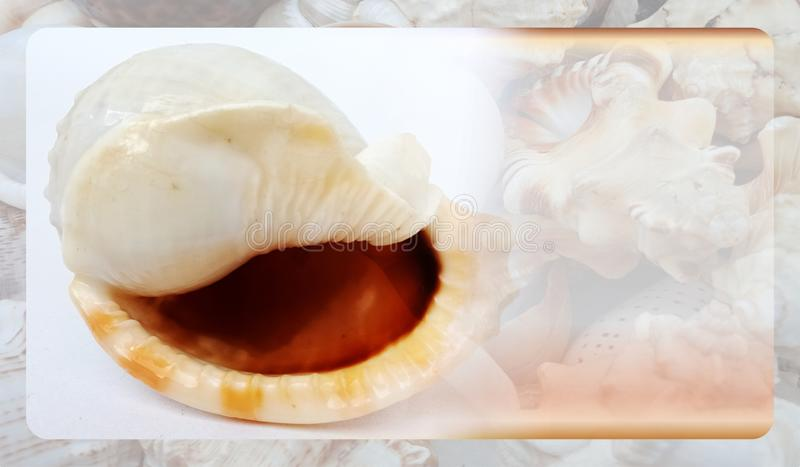Abstract sea shell background template for website, abstract info graphics template design. Banner, business card, invitation.Abstract info graphics template stock photo