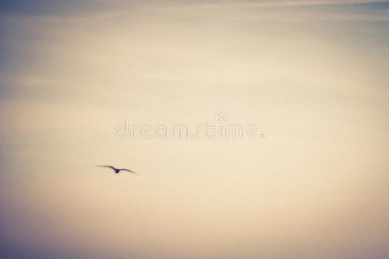 Abstract seagull in flight royalty free stock photos