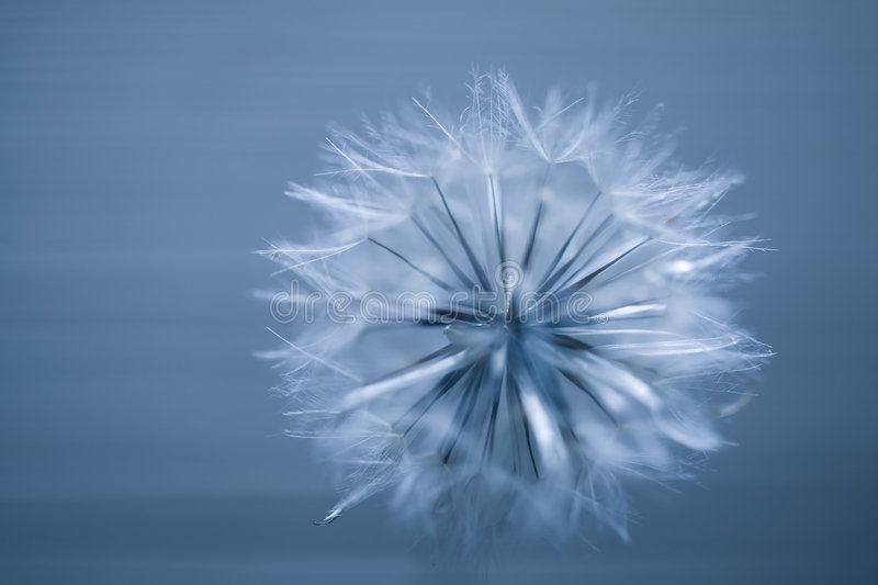 Download Abstract seed ball stock image. Image of fluff, soft, ball - 1950847
