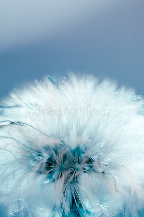 Abstract seed ball. Dandelion seed ball on blue background royalty free stock photos
