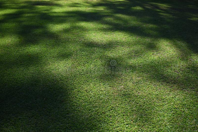 Abstract shaded lawn grass mottled texture stock images