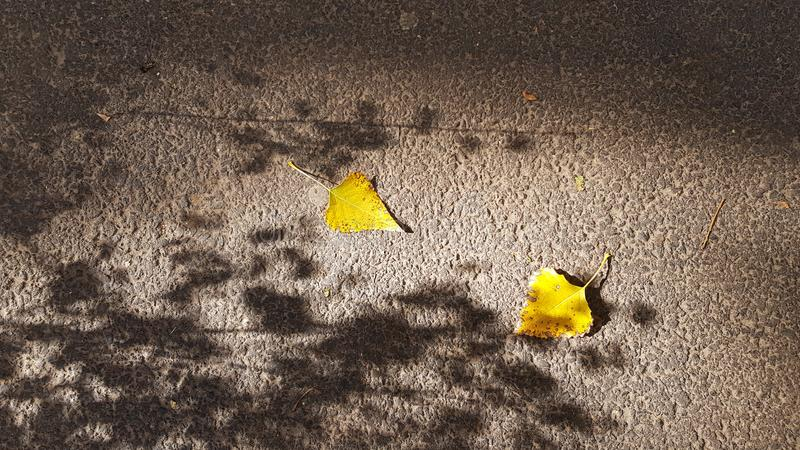 Abstract shadows from tree branches on asphalt sidewalk with two yellow fall leaves stock images