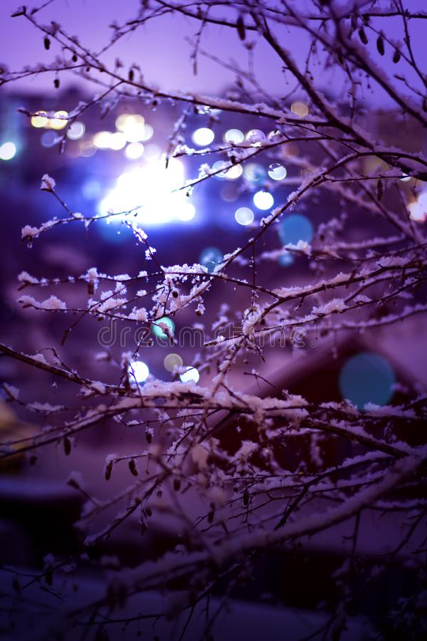 Abstract shoot of a branch whith city lights behind it at night stock image