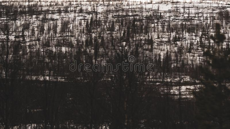 Abstract snowy forest landscape. Dark forest under snow. winter background royalty free stock images