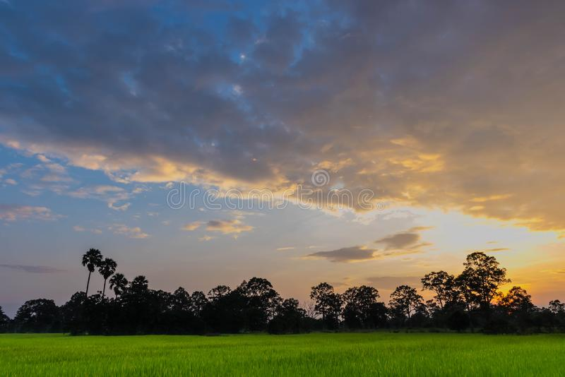 silhouette of the sunset with the green paddy rice field, the beautiful sky and cloud in the royalty free stock image