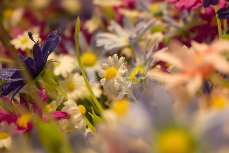 Abstract soft Blurry of Flower and colorful background royalty free stock image