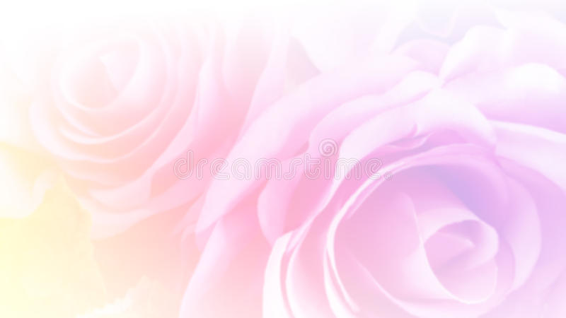 Abstract soft pastel pink roses with blurred color filter as background royalty free stock photo