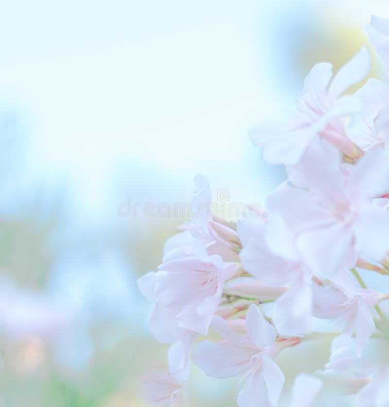 The abstract soft sweet pink flower background stock image