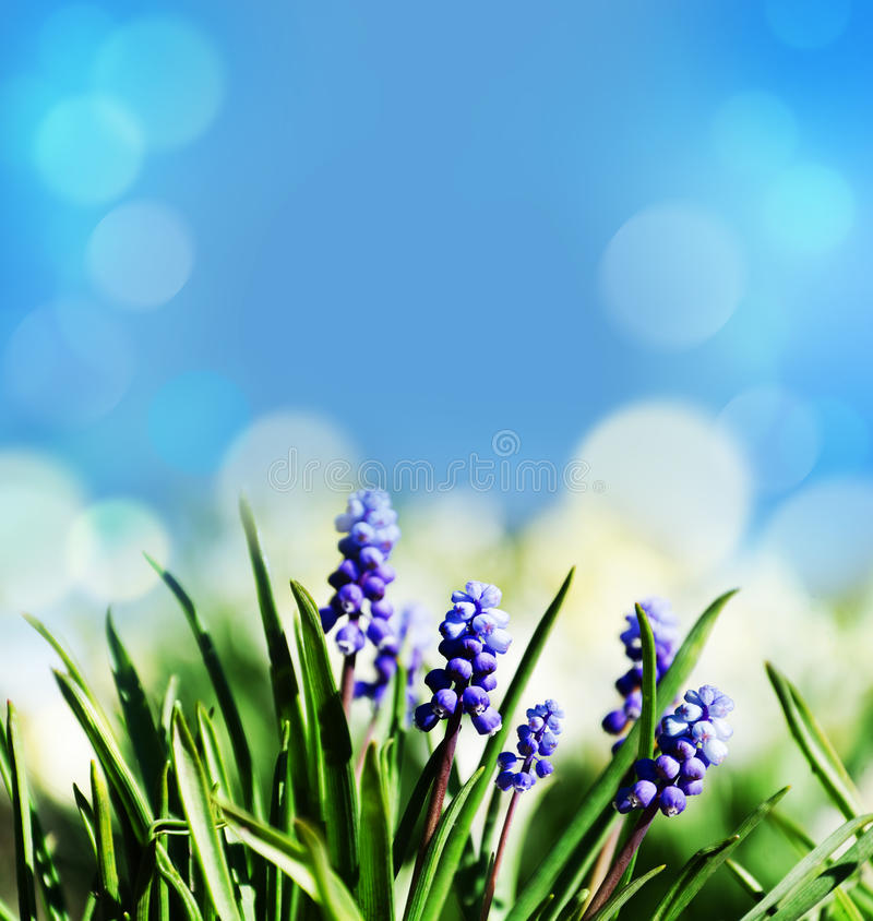 Abstract spring easter background royalty free stock image
