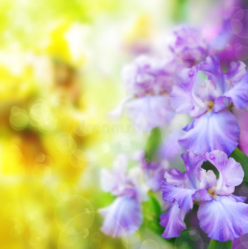Abstract spring flower Background royalty free stock photos