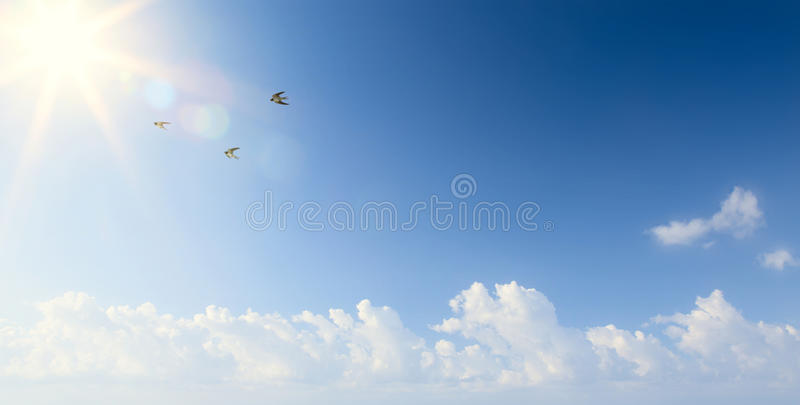 Abstract Spring morning landscape with flying birds in the sky royalty free stock photography