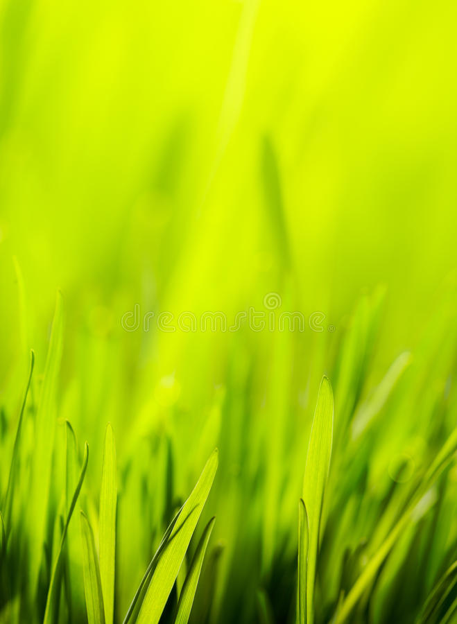 Abstract spring nature green background stock photo