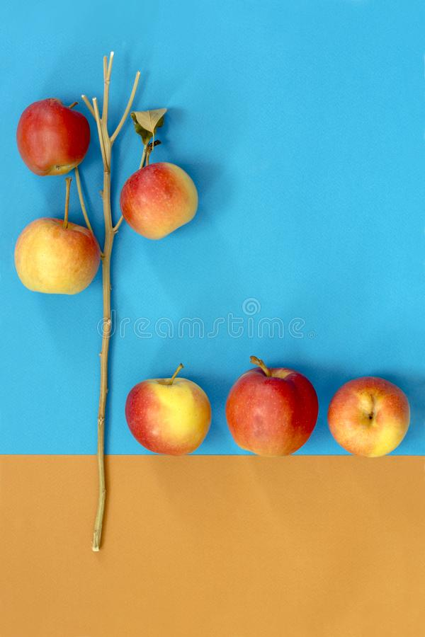 Abstract still life with apples royalty free stock photo