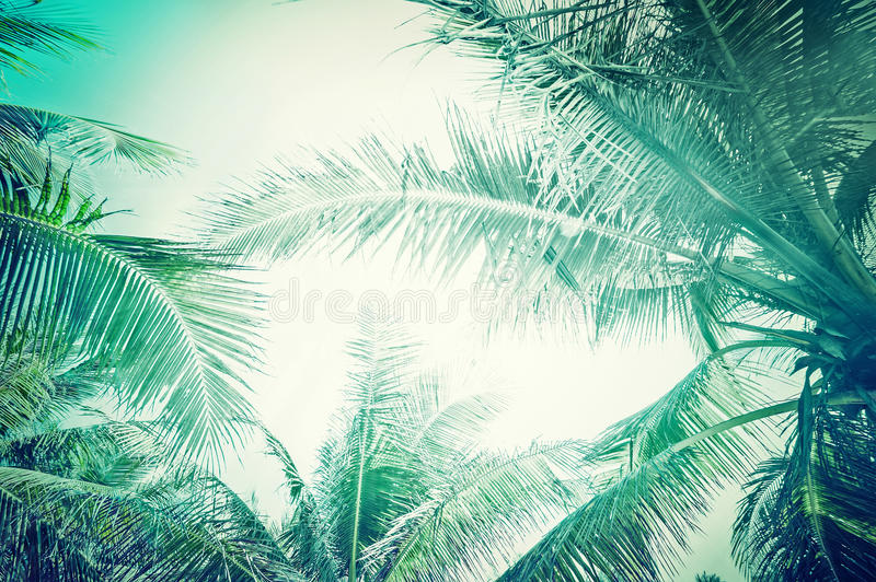 Abstract summer background with tropical palm tree stock photos