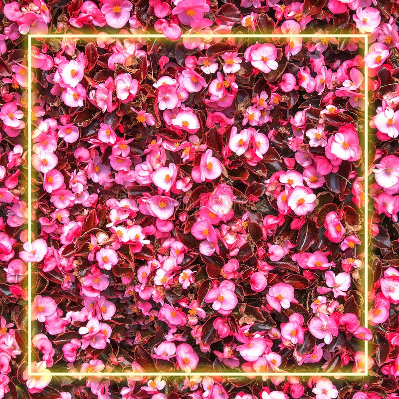 Abstract summer bright flowers background with creative fluorescent neon light frame, red and pink colors, floral card stock images