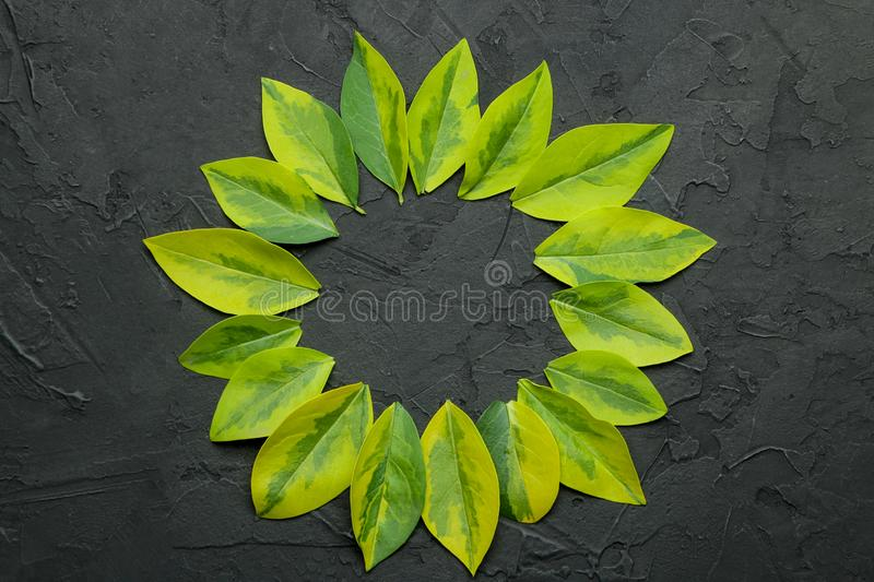 Abstract summer composition. Frame for text from beautiful green leaves on a concrete black background. top view. free place stock image