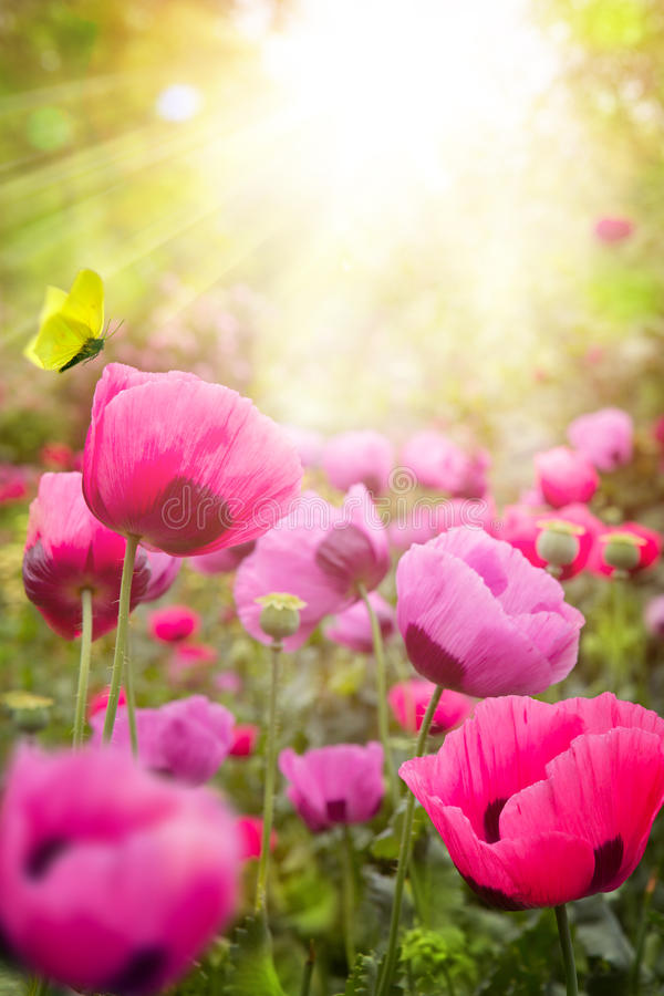 Abstract summer Floral background. Abstract sunny summer Floral background stock photography