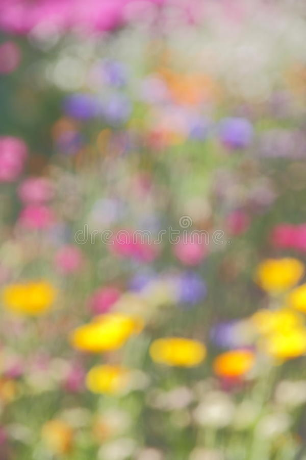 Abstract Summer Nature Blur Background