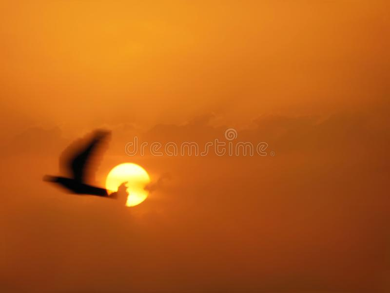 Abstract sunset scenic view golden red sky with clouds and flying bird passing through the sun with motion blur royalty free stock photo
