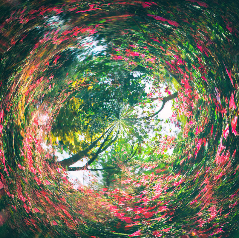 Abstract swirled background of nature.  stock photography