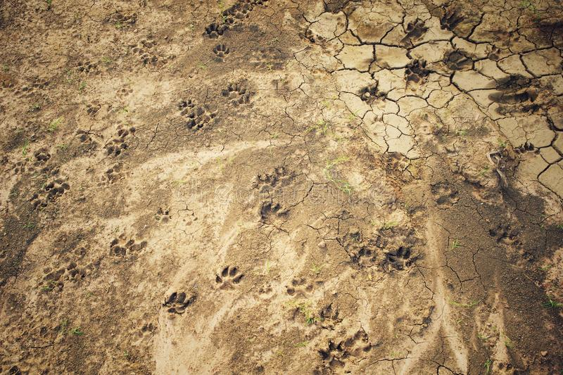 Abstract texture and background of soil ground with dog's foot stamp stock images