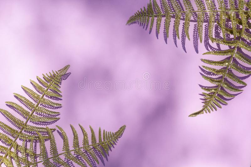 Abstract texture with gold fern leafs, palm on pink sunlight background for design pattern artwork, modern concept of natural stock photography