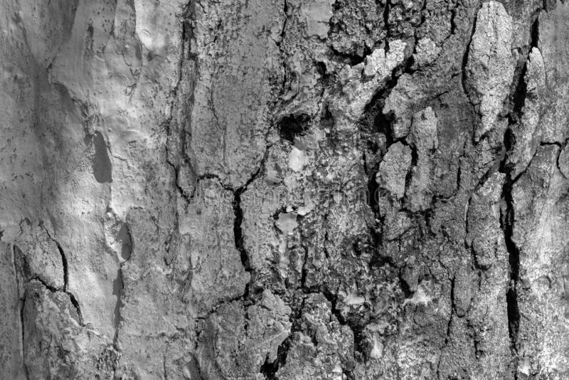 Abstract texture of an old tree stock photos