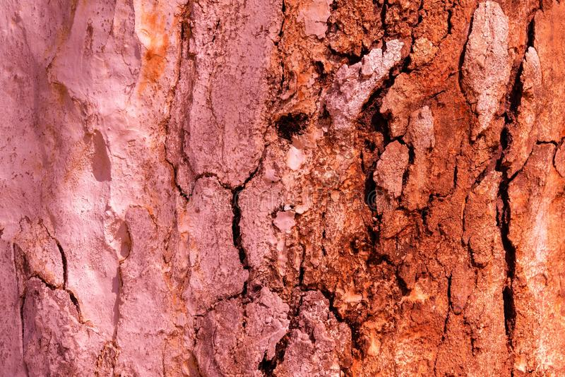 Abstract texture of an old tree stock photography