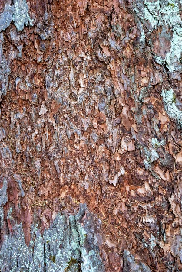 Abstract texture of an old tree royalty free stock image