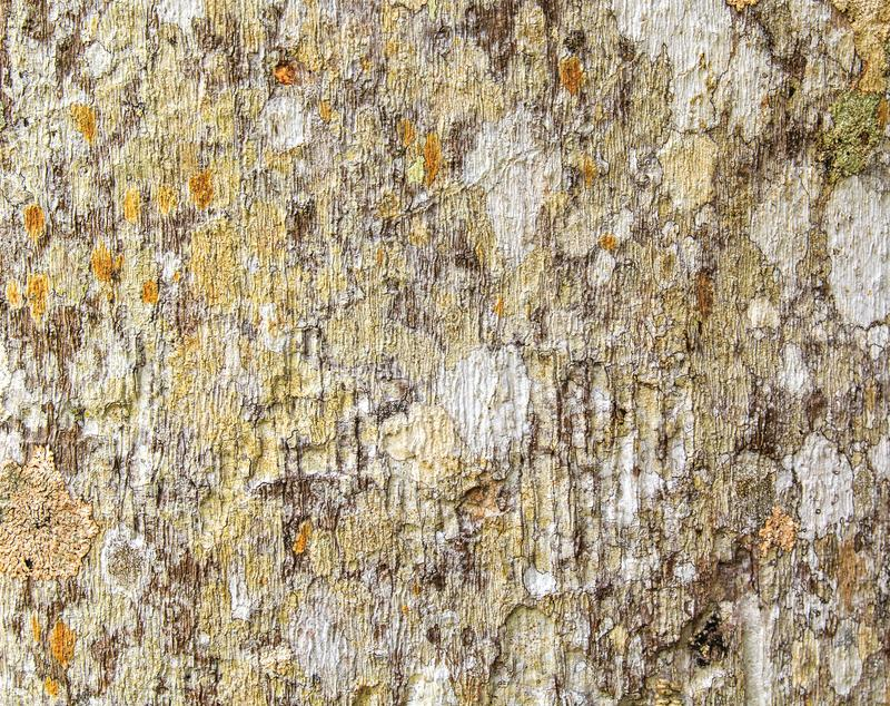 Abstract texture of an old tree bark. Natural wood background royalty free stock photography