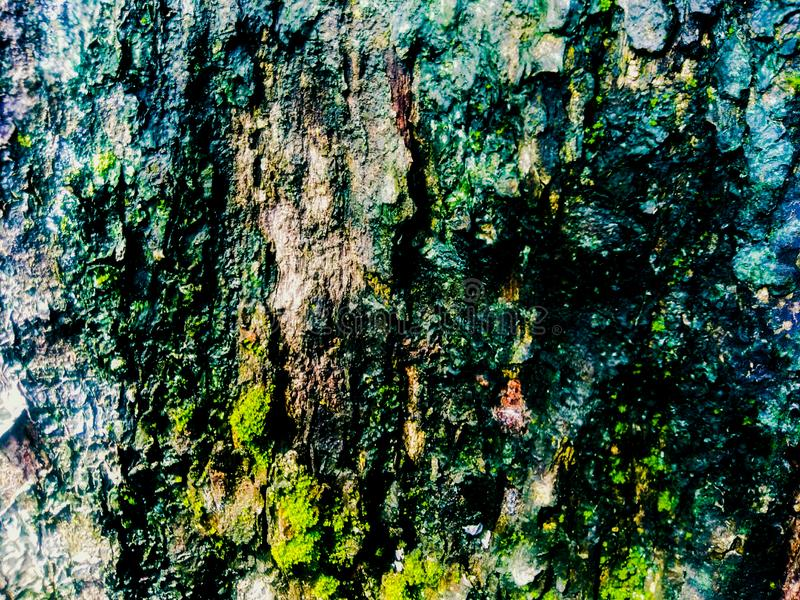 Abstract texture old tree skin with litle moss royalty free stock images