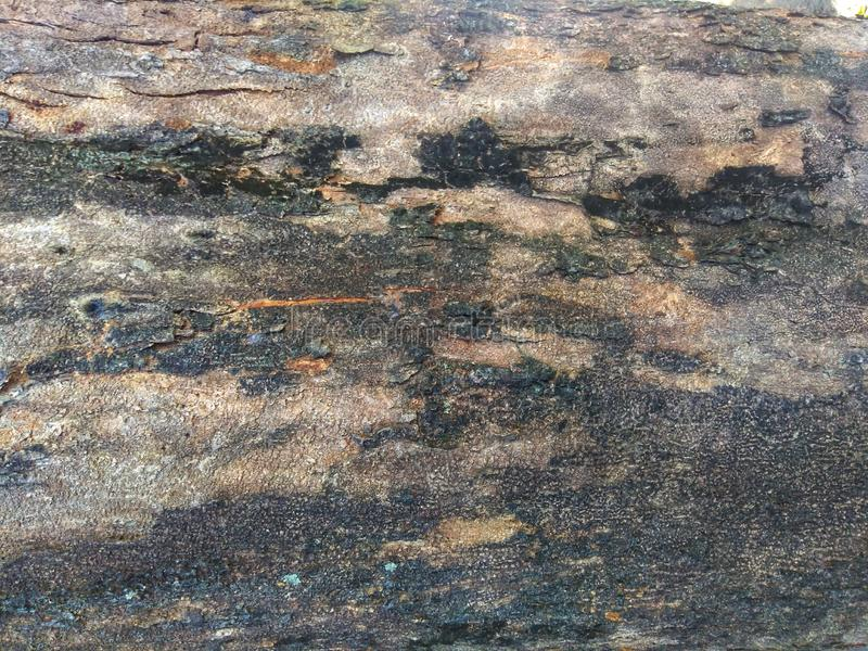 Abstract texture of old tree skin. Natural texture using as a background stock photography