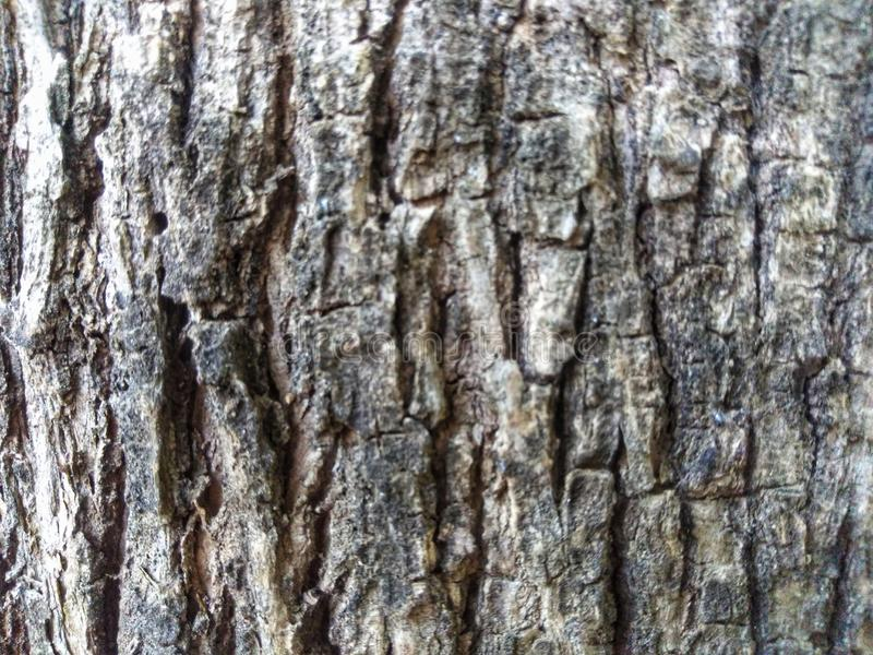 Abstract texture of old tree skin. Natural texture using as a background royalty free stock photo