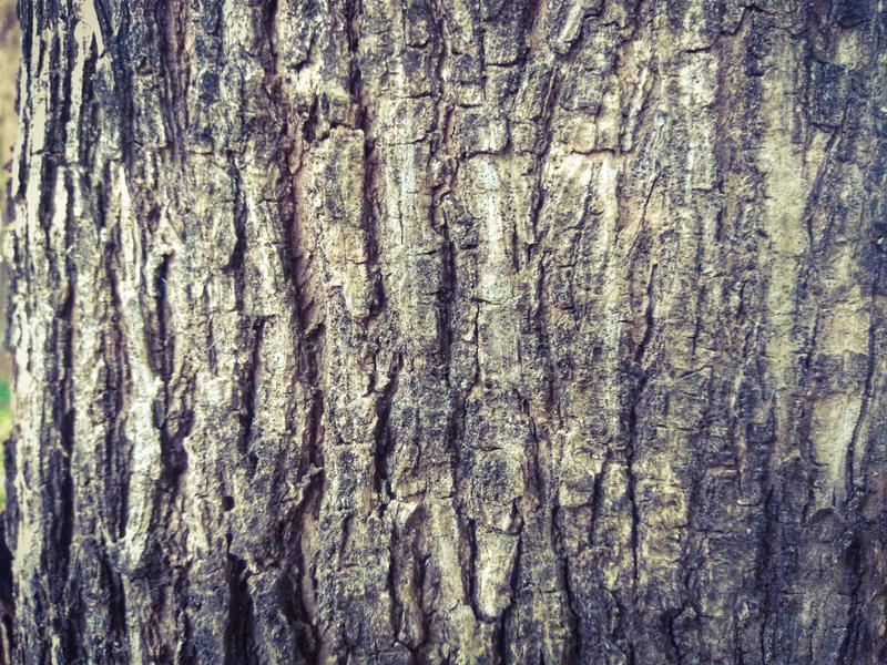 Abstract texture of old tree skin. Natural texture using as a background stock photo