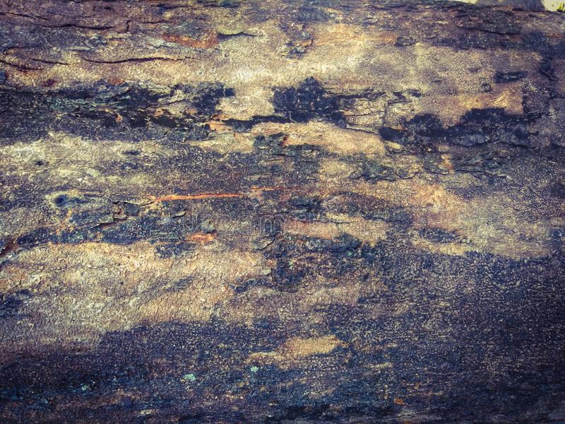 Abstract texture of old tree skin. Natural texture using as a background stock image