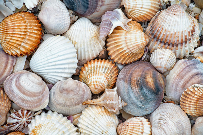 Abstract texture of shells. Beautiful abstract texture of shells con the beach stock photos