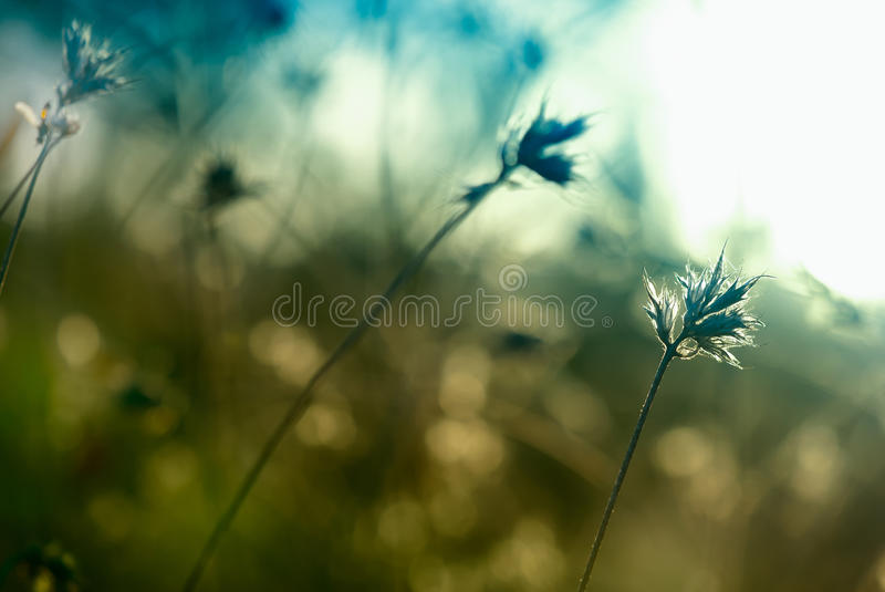 Abstract thistle. Toned abstract thistle bathing in sunlight stock image